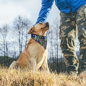Pañuelos de Among Us para perros